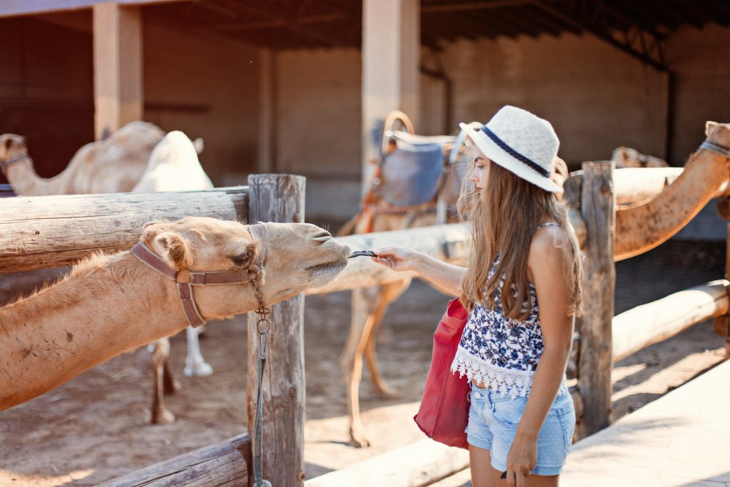What to do in Cyprus- CAMEL PARK